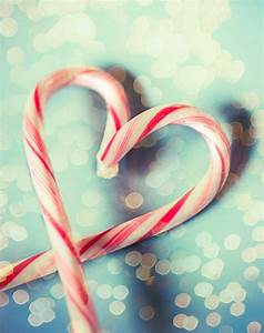 Color photography - Candy Cane - still life - Christmas ...