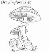 Mushroom Mushrooms Drawing Draw Drawings Pencil Easy Fungi Coloring Drawingforall Line Colored Tutorial Pages Pencile Tutorials Lines Tegning Step Neo sketch template