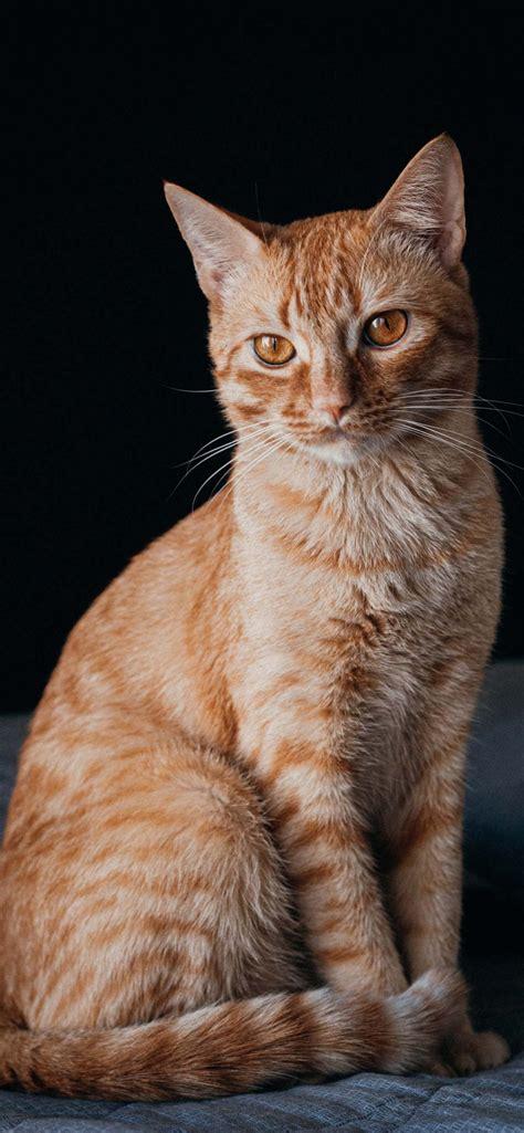 cat phone wallpapers september  womens cat  shirts