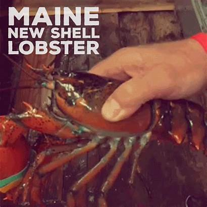Lobster Shell Maine Tried Ever Shells Lobsterfrommaine