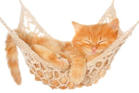 Cat In Hammock why my cat needs a cat hammock hammock chillout