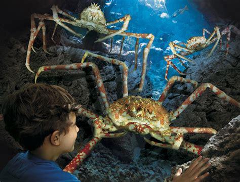 hunstanton sea life centre attractiontix