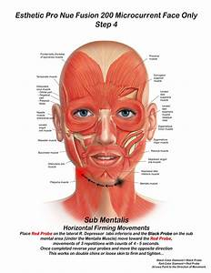 Sinuses In Back Of Head Diagram  U2014 Untpikapps