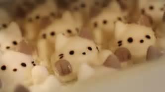 cat marshmallows this is 3d coffee for regular folks kotaku australia