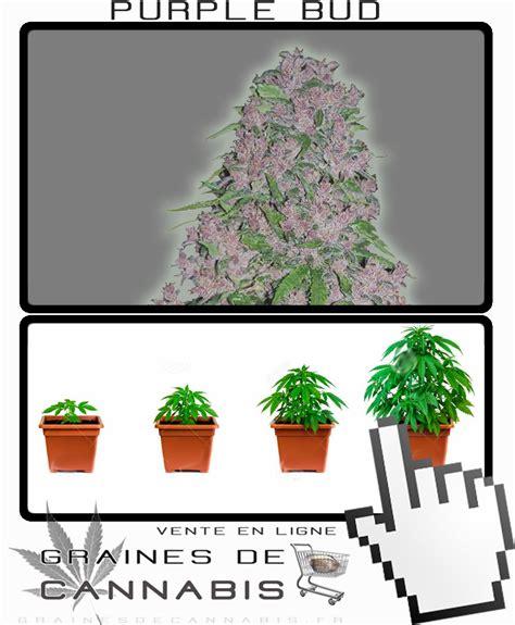faire pousser du cannabis en interieur facilement