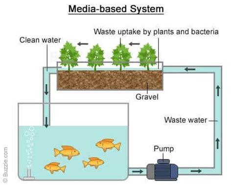 build  aquaponics system  scratch  update