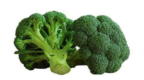 cuisiner brocolis le brocoli qualités nutritionnelles et vertus médicinales