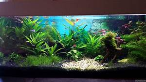 Co2 Rechner Aquarium : guppybecken flowgrow aquascape aquarium database ~ Orissabook.com Haus und Dekorationen