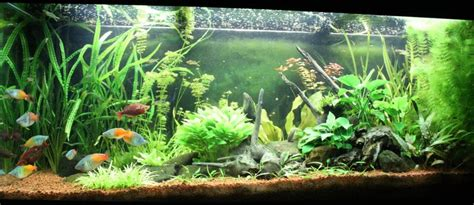 aquarium rivi 232 re australienne par naja75