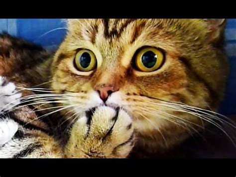 Cute Kittens And Funny Cats Videos Compilation Happy