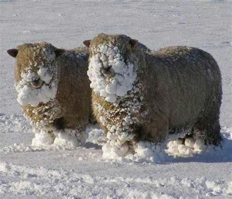 lustige winter bilder lustige winter bilder 3 kleine pause unterhaltung
