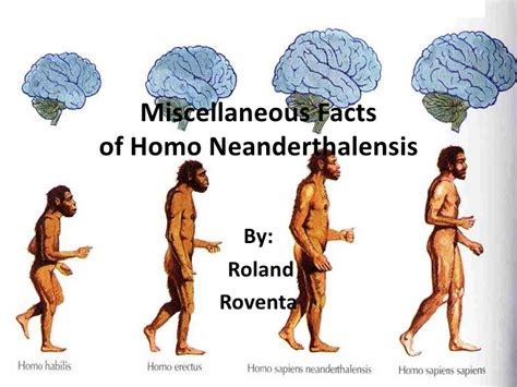 Homosapien Vs Neanderthal Pictures To Pin On Pinterest
