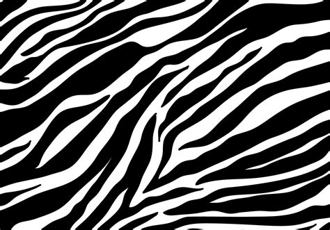 zebra  vector art   downloads