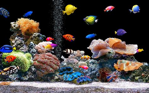fish aquariums tips to get cool fish tanks