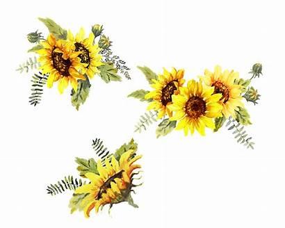 Sunflowers Watercolor Sunflower Clip Sunshine Clipart Floral