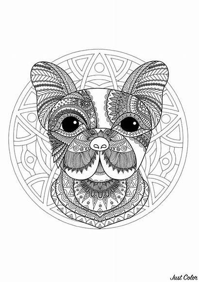 Coloring Mandala Dog Head Simple Mandalas Funny