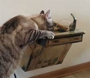 Wall-Mounted Cat Drinking Fountain - The Green Head