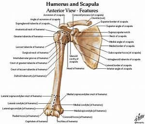 45 Best Anatomy Lab Images On Pinterest