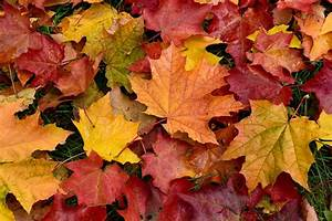 Autumn, Leaf, Uses, And, Disposal, How, To, Get, Rid, Of, Fallen, Leaves, In, Autumn
