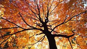 Beautiful Autumn Trees Wallpapers|http://refreshrose ...