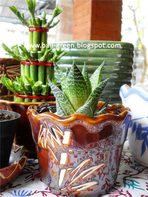 putra garden bali pot keramik tanaman hias murah