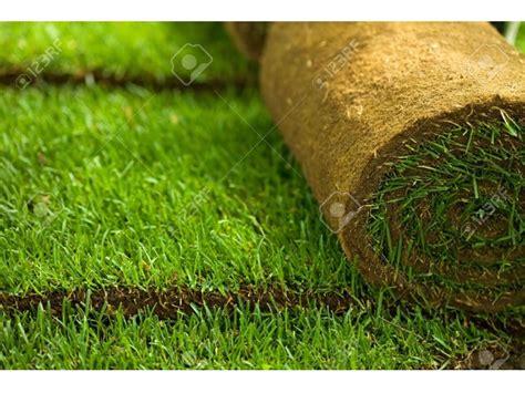 Kikuyu Grass Carpet At Asepsis Limited Stores Nairobi
