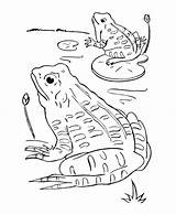 Pond Coloring Pages Animals Frogs Frog Printable Printables Getcolorings Ponds Paper sketch template