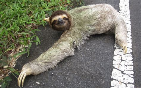 Sloth Backgrounds Hd Pixelstalknet