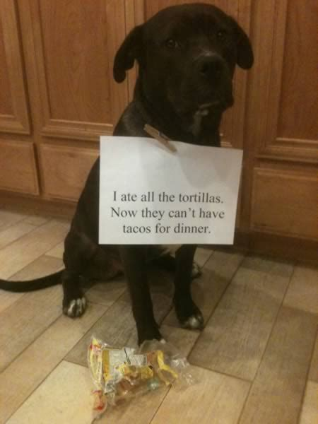 absolutely hilarious dogshaming signs dog shaming