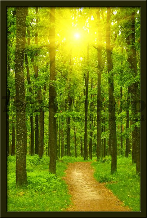 camino decorativo vinilo decorativo camino en el bosque