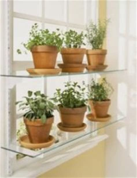 Window Sill Plant Shelf by 1000 Images About Window Sill Garden On