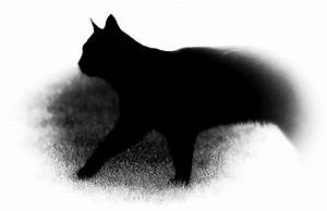 Küchenboden Schwarz Weiß : ergebnis f r ein katzenbild in schwarz wei der hintergrund wurde weich ausgeblendet ~ Sanjose-hotels-ca.com Haus und Dekorationen