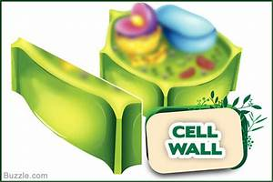 Basic Unit Of Life  Plant Cell Structure And Functions