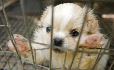humane humane society releases list  worst puppy mills