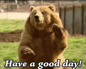 Bear GIFs - Find & Share on GIPHY