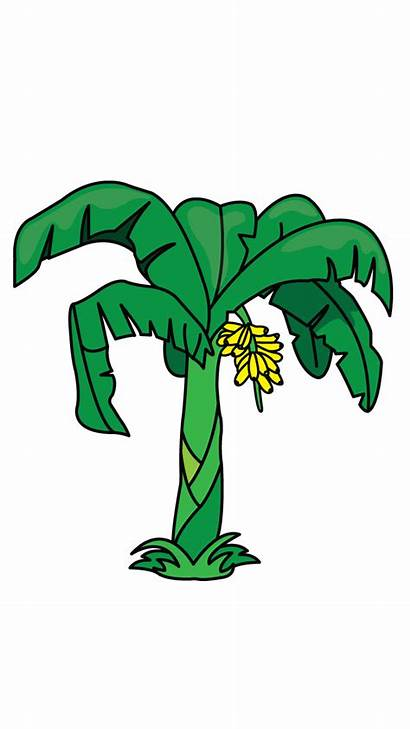 Banana Tree Draw Drawing Clipart Plants Trees