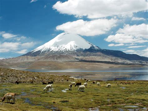 The Places You'll Go: Lauca National Park   Blog Posts   WWF