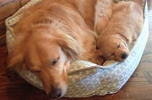 top best dog beds money can buy dog beds and costumes With best dog bed for the money