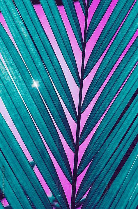 Palm leaf pattern/background by Wizemark Stocksy United