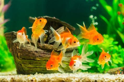 mon premier aquarium pour poisson