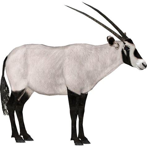 Arabian Oryx (DRAGON-unit911) | ZT2 Download Library Wiki ...