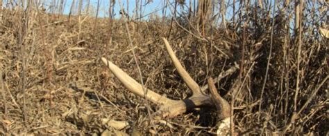 22 best images about shed hunting on pinterest rules for
