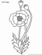 Coloring Pages Poland Flowers Flower Poppy Coloringpagebook Printable Sheets Corn Remembrance Coloringpages101 Cartoon Spring Advertisement sketch template