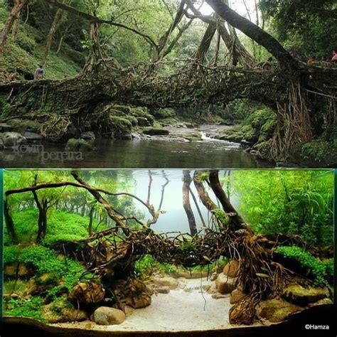 aquascape how to aquascape version of a living root bridge garden