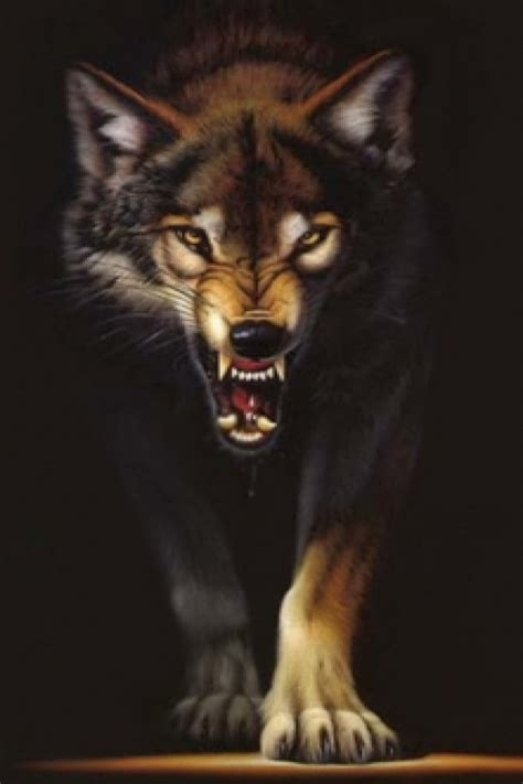 Angry Lone Wolf Wallpaper by Wolf Wallpaper For Iphone Wallpapersafari
