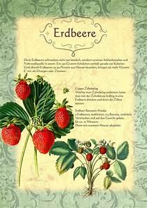 Erdbeeren Pflanzen Die Wichtigsten Tipps : die besten 17 ideen zu erdbeeren pflanzen auf pinterest ~ Lizthompson.info Haus und Dekorationen