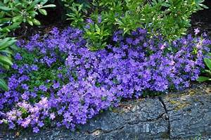 35 best images about Edible Ground Covers on Pinterest ...