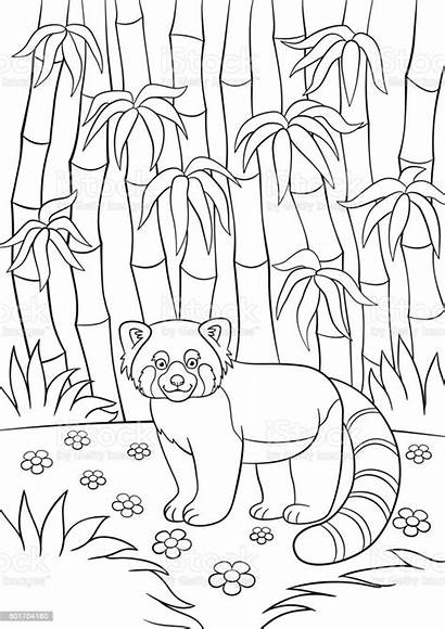 Panda Coloring Forest Bamboo Stands Smiles Wenig