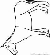 Mule Coloring Pages Google Kleurplaten Dier Projects Zoeken Vormen Kratts Wild Nl Lightupyourbrain Bird sketch template