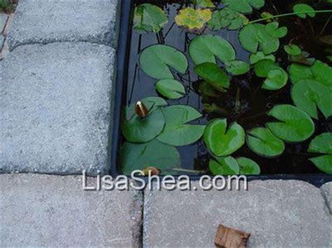 above ground water garden photos